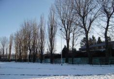 Výrez topoľov v areáli OŠK (18.-20.1.2017)